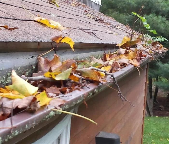 Clogged roof gutter full of leaves and debris from trees.